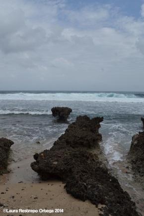 cabo tiburon - playa 8