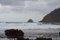 cabo tiburon - selva y mar 2