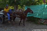 capurgana - caballo 3