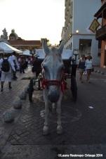 cartagena - caballo