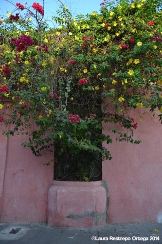cartagena - casa rosada 3