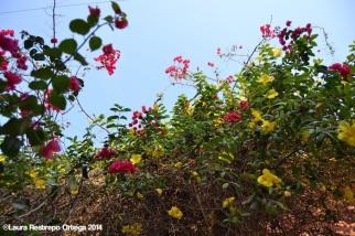 cartagena - casa rosada 4