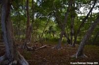 faro sapzurro - bosque 1