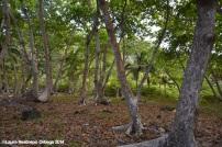 faro sapzurro - bosque 2