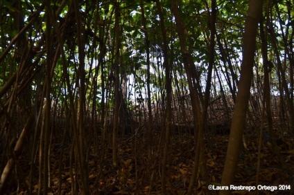 faro sapzurro - bosque 3