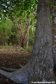 faro sapzurro - bosque 5