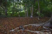 faro sapzurro - bosque 7