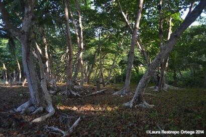 faro sapzurro - bosque 8