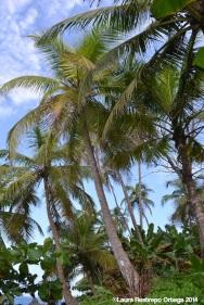 faro sapzurro - palmeras