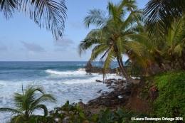 faro sapzurro - selva y mar 1