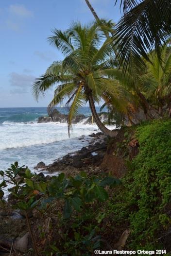 faro sapzurro - selva y mar 2