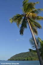 sapzurro - bahia palmera