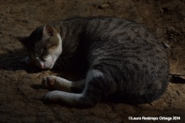 sapzurro - gato 2