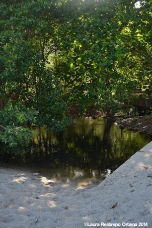 sapzurro - manglar 1
