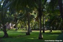 sapzurro - palmeras