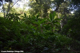 sapzurro - selva 1