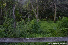 sapzurro - selva 2