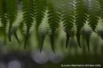 taller fotosigno 106