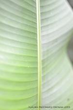 taller fotosigno 61