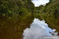 Río Caquetá 7