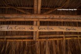 Palomino La Casa de Guadua 1