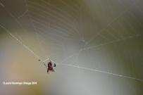 reserva orejiamarillo araña 1
