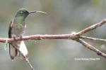 reserva orejiamarillo colibrí 14
