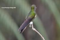 reserva orejiamarillo colibrí 17