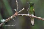 reserva orejiamarillo colibrí 18