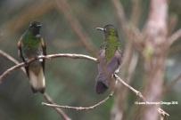 reserva orejiamarillo colibrí 4