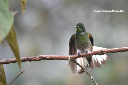 reserva orejiamarillo colibrí 9
