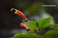reserva orejiamarillo flores 3