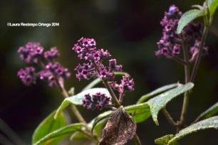 reserva orejiamarillo flores 4