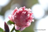 reserva orejiamarillo flores 6