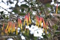 reserva orejiamarillo flores 7