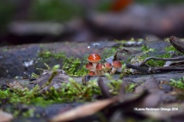 reserva orejiamarillo fungi 2