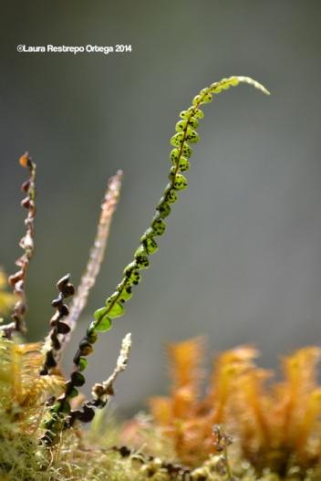 reserva orejiamarillo hojas 3