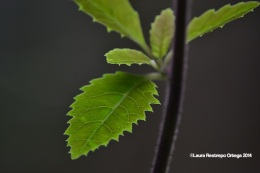 reserva orejiamarillo hojas 4