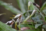 reserva orejiamarillo orquídea 10