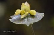 reserva orejiamarillo orquídea 11