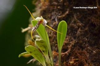 reserva orejiamarillo orquídea 13