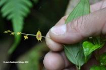 reserva orejiamarillo orquídea 2