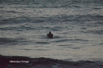 Piyi surf 29