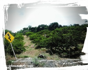 RoadTrip story 11
