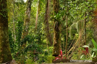 JungleBeach 30