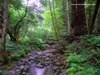 SF Muir Woods 3