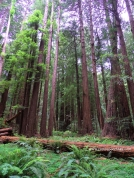 SF Muir Woods 5