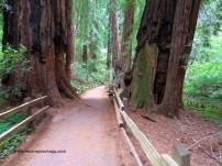 SF Muir Woods 7