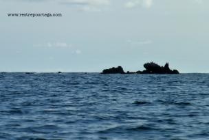 Nuqui ballenas 10