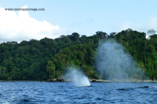 Nuqui ballenas 11